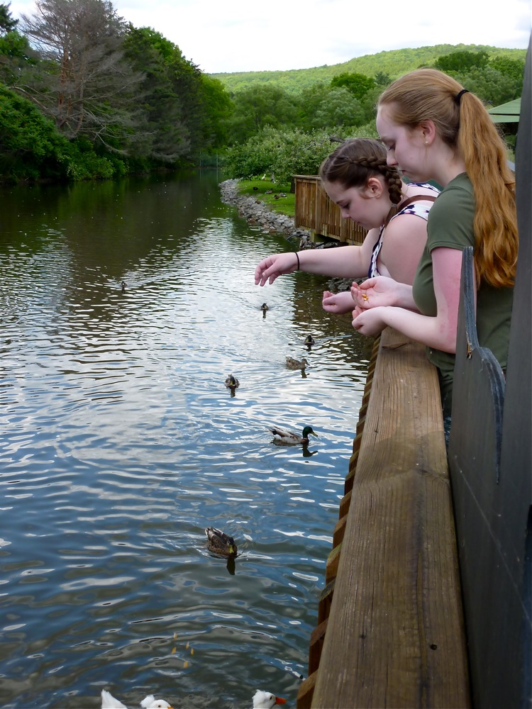 Feeding the ducks at the Fly Creek Cider Mill in Fly Creek NY.